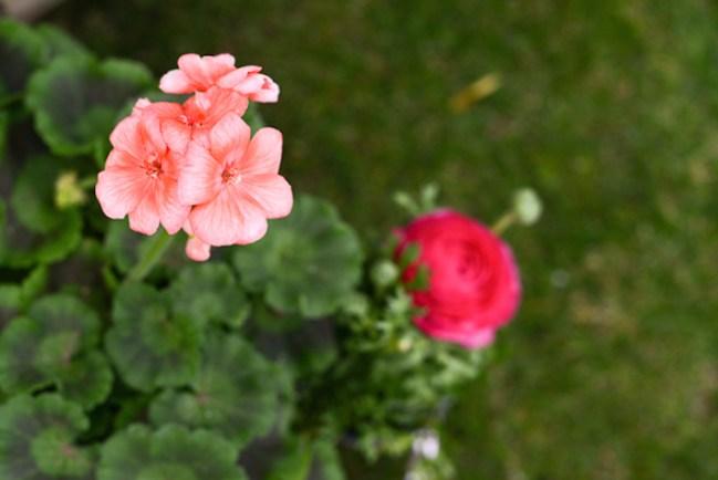 um-doce-dia-decoracao-no-jardim-para-o-dia-das-maes-12