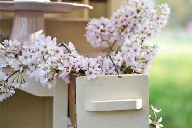 um-doce-dia-flor-cerejeira-02